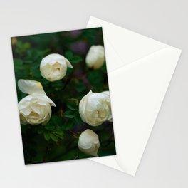 White Rose Bush Stationery Cards