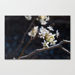 Wabi Sabi - color and light Canvas Print