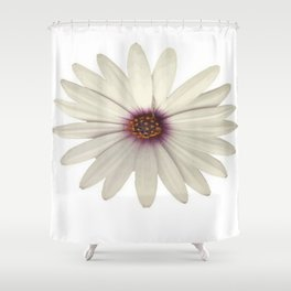 Symmetrical African Daisy with White Petals Shower Curtain