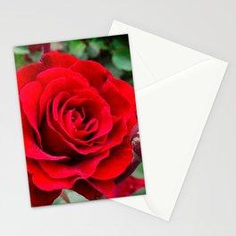 Rose revolution Stationery Cards