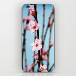 Pretty Pink Peach Petals iPhone Skin