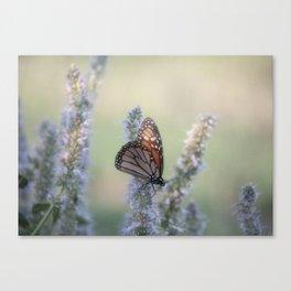 Monarch Butterfly XXII Canvas Print