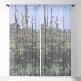 Rhubarb - Rheum sp. Sheer Curtain