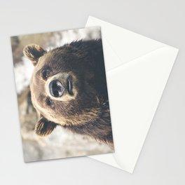 Animal bear Stationery Cards