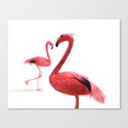 Pink Flamingos with Heart Canvas Print