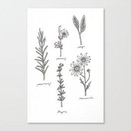 Kitchen Herbs Canvas Print
