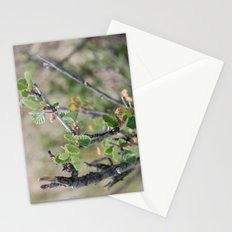 Little Leaves Stationery Cards