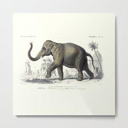 Vintage Indian Elephant Metal Print