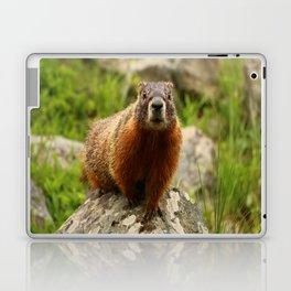 On The Rocks Marmot Laptop & iPad Skin