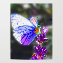 Butterfly on the Lavender Poster