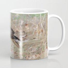 Ferruginous Hawk; 1st year, light juvenile. (Image No.1) Coffee Mug