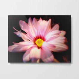 Pink Daisy 2 Metal Print