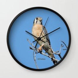 A Kestrel Says Hello Wall Clock