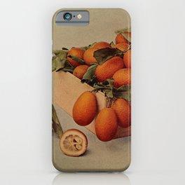 Vintage Print - Birds and Nature (1904) - Kumquat iPhone Case