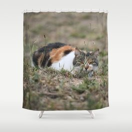Multicolor cat is playing hide and seek Shower Curtain