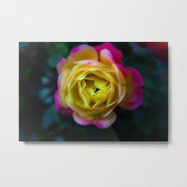 Foggy Rainbow Rose Metal Print
