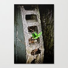 Nature finds a way. Canvas Print