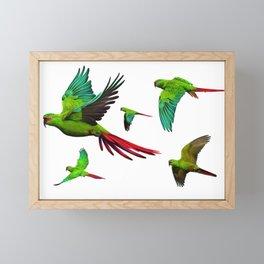 Slender-billed Parakeet (Enicognathus leptorhynchus) Framed Mini Art Print