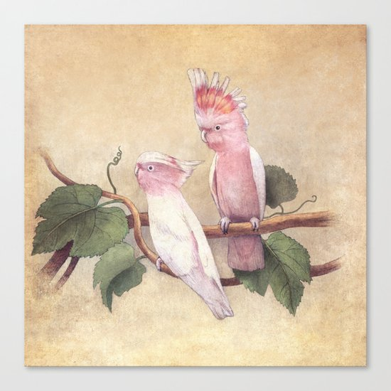 Pink Cockatoos  Canvas Print