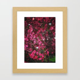 Spring in Bloom Framed Art Print