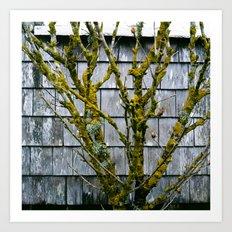 Mossy Tree on Nantucket Art Print