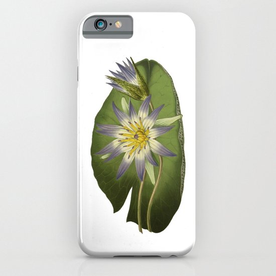 Water Lily Vintage Botanical Print iPhone & iPod Case