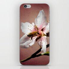 Life is Sweet iPhone & iPod Skin