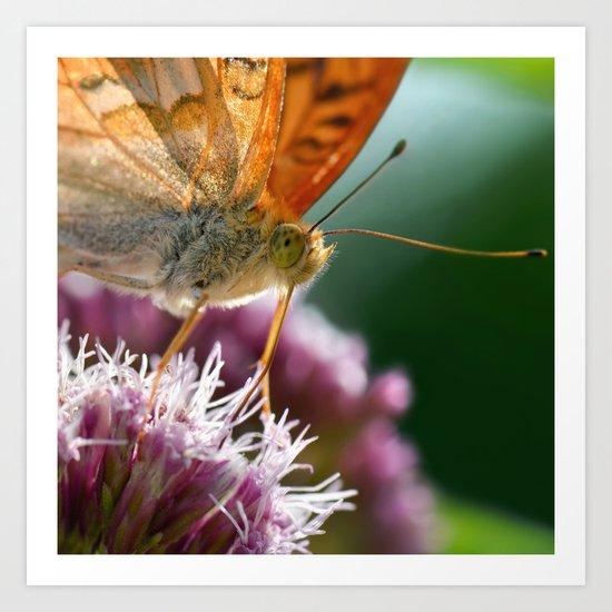 Butterfly macro 67 Art Print