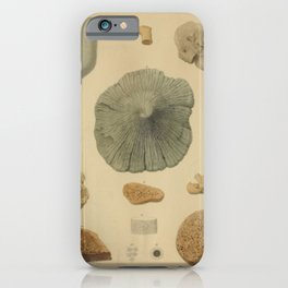 Coral Fossils iPhone Case