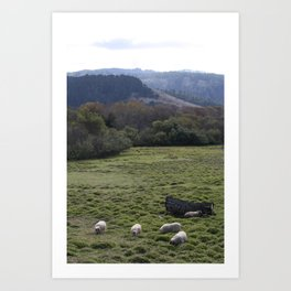 Sheepscape Art Print