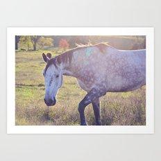 Star Horse Art Print