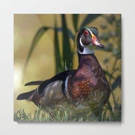 Mallard Wood Duck Metal Print