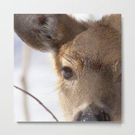 Watercolor Deer, Eastern Whitetail 14, Antietam, Maryland, Cold Stare Metal Print