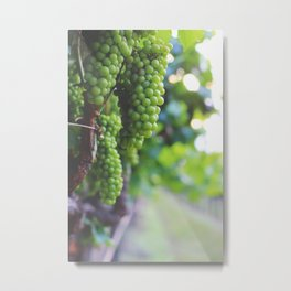 Drink More Wine in Napa Metal Print