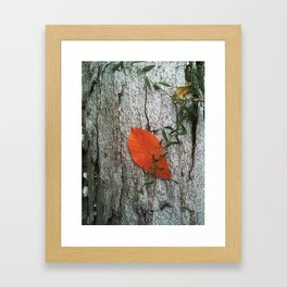 Leaf On Fire Framed Art Print