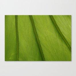 Green Leaf Texture 05 Canvas Print
