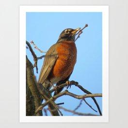 Proud American Robin Art Print