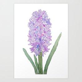 purple pink hyacinth watercolor Art Print