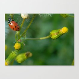 Lady Bug Dandelion Canvas Print