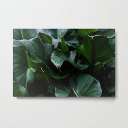 Flower Photography by Nicolas Solerieu Metal Print