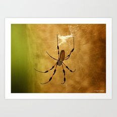 Banana Spider Art Print