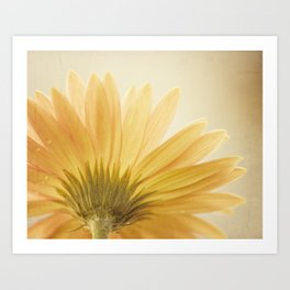 Gold Yellow Flower Photography, Golden Daisy Floral Photo, Nature Botanical Macro Picture Art Print