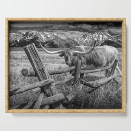 Texas Longhorn Steer by an Old Wooden Fence in Black and White Serving Tray