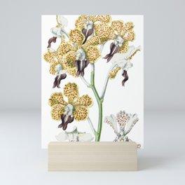 1850 Orchidaceae Mini Art Print