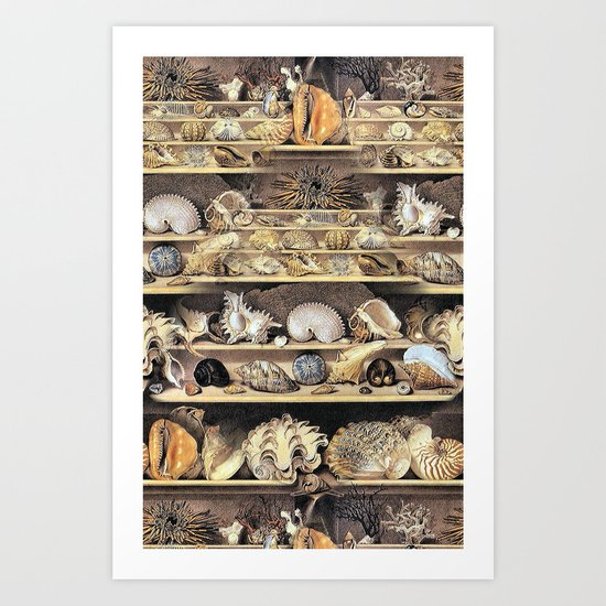 Vintage Shell Collection Art Print
