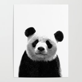 Black and white panda portrait Poster