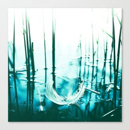 Spring Feather Canvas Print