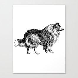 The Collie Canvas Print