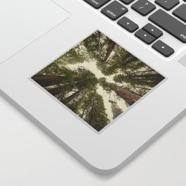 Into the Mist - Nature Photography Sticker