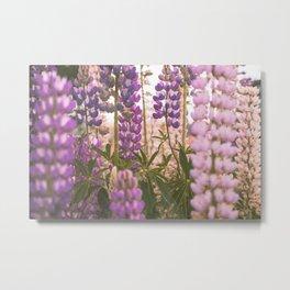 Lupine Flower Dreams Metal Print
